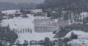 maline sneg